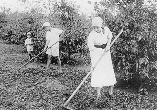 Japanese_Workers_in_Coffee_Plantation
