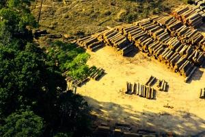 corte de árvores na amazônia